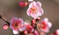 中国十大名花,你知道几种?
