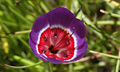 大自然的奇特植物,你见过吗?