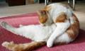 科学证明猫既是液体也是固体